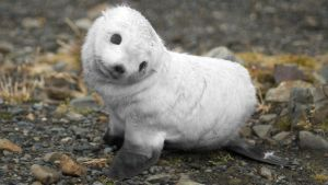 Baby-seal-animals-7905896-1920-1080 by JumpinWombango