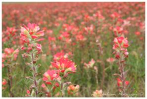 A Mile of Paintbrushes by TheDarkRoom-Photo