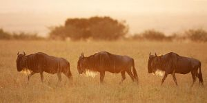 Morning in Mara ll by serhatdemiroglu