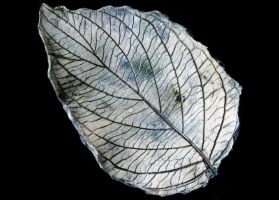 Leaf 185 by Lit-Smith