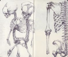 Siamese Twin Fetal Skeleton by SketchbookNoir