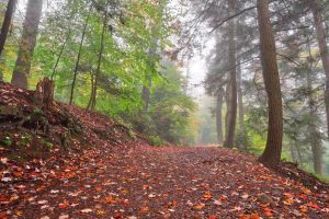 Misty Autumn Trail - Ricketts Glen by somadjinn