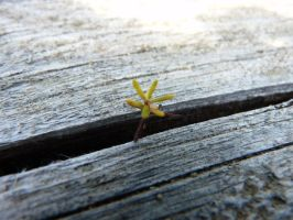 Flower growing from wood by MarianasTrench14