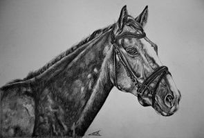 Donnar, The horse of a friend. by Lmk-Arts