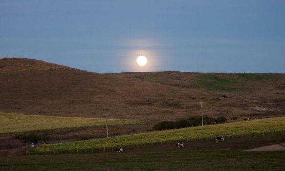 Moon Over the Mustard Field by Fantastree