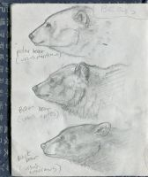 Bear sketches by Shockshockshad