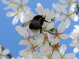 Blossom Bee by Toefje-Kunst
