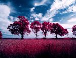Infrared Trees by DCooper20