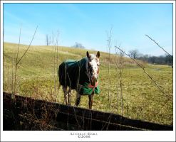 Indiana Horse by renderedsublime