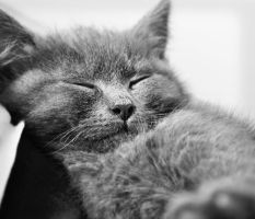 Dreaming Kitten by soelu412