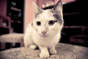 Cuteness factor: one million by bagba