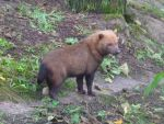Gaia Zoo - Bush dog by SSJGarfield