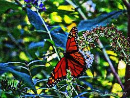 Monarch Butterfly by jim88bro