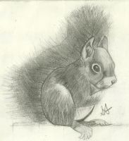 Squirrel Drawing by AllyXCat3