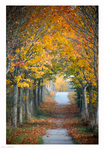 Tunnel of trees by Moonbird9