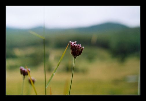 i think these are weeds by zeyus