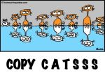 COPY CaTs by humourinquotes