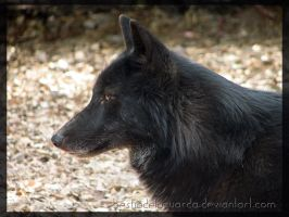 Black wolf 03 by BestiaDeLaGuarda
