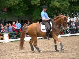 Dressage Riding Canter Stock Pirouette by LuDa-Stock