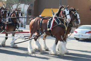 The Clydesdale March by Sirevil
