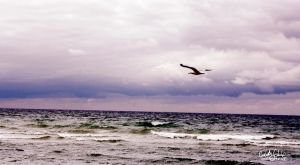 Freedom by Loonaki