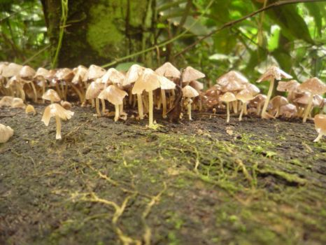 Fungi by SuAlmont