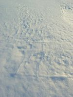 Snow texture 1 by Arctic-Stock