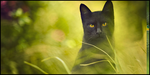 Black Cat - Tag by SecurityGFX