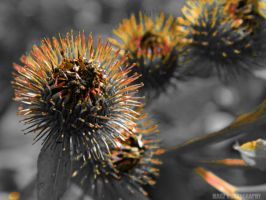 Burrs by Madz4ever