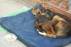 Cat and dog begging by DrakseidFM
