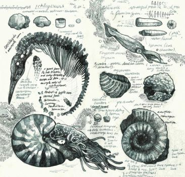 Sketchbook - Fossils #1 by PaperandDust
