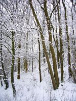 Trees in Winter by serel