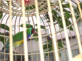 Caged Bird by SquishyPandaPower