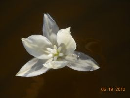 Floating Flower by BabyImMeee