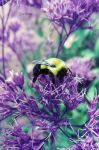 Abeille 3 by EveVictus