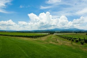 Chandon Winery by addr010