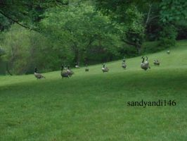 March of the Geese by sandyandi146