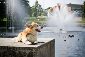 Rauli by the musical fountain by uudii