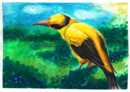 Oriole by AnotherRaven