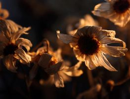 flower sunset by Blaumohn