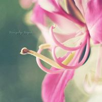 The bloom of possibilities by simplysuzu