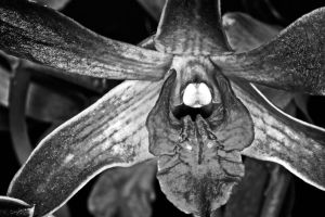 Black and white orchid by YvdlArt