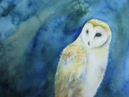 Barn Owl by seadworp
