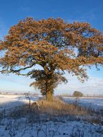 Winter Tree Yorkshire by davepphotographer