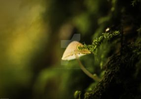 lantern big as moss... by clochartist-photo