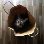 Catch The  Cat Bag! by LEQUARK
