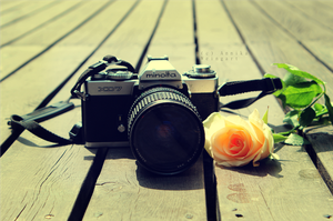 The Camera and the Rose by time-photography
