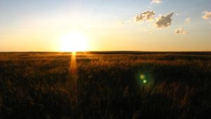 Prairie Sunset by Dan52T