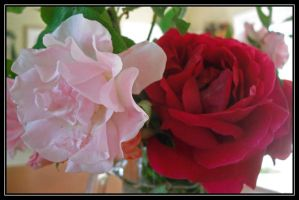 Mother's Day Roses by mim304