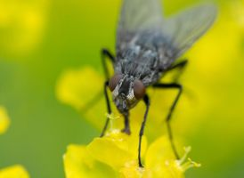 Fly Macro by Desintegrator